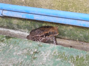 A big toad in the laundry area of Hunter's location.